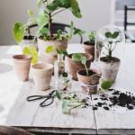 Mini-post : frais et vert