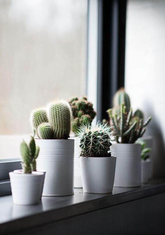 cactus-fenetre