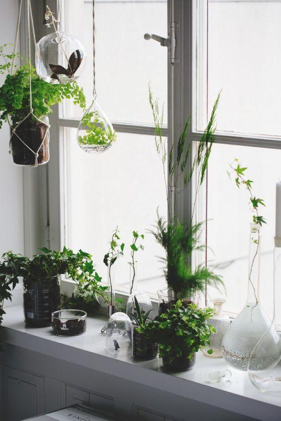 plantes-fenetres-2