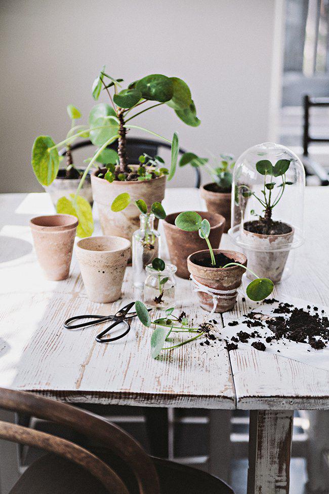 semis-plantations-bois-brut