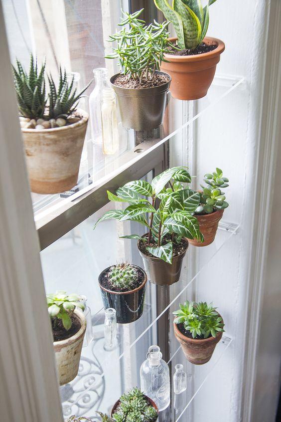 plantes-fenetres