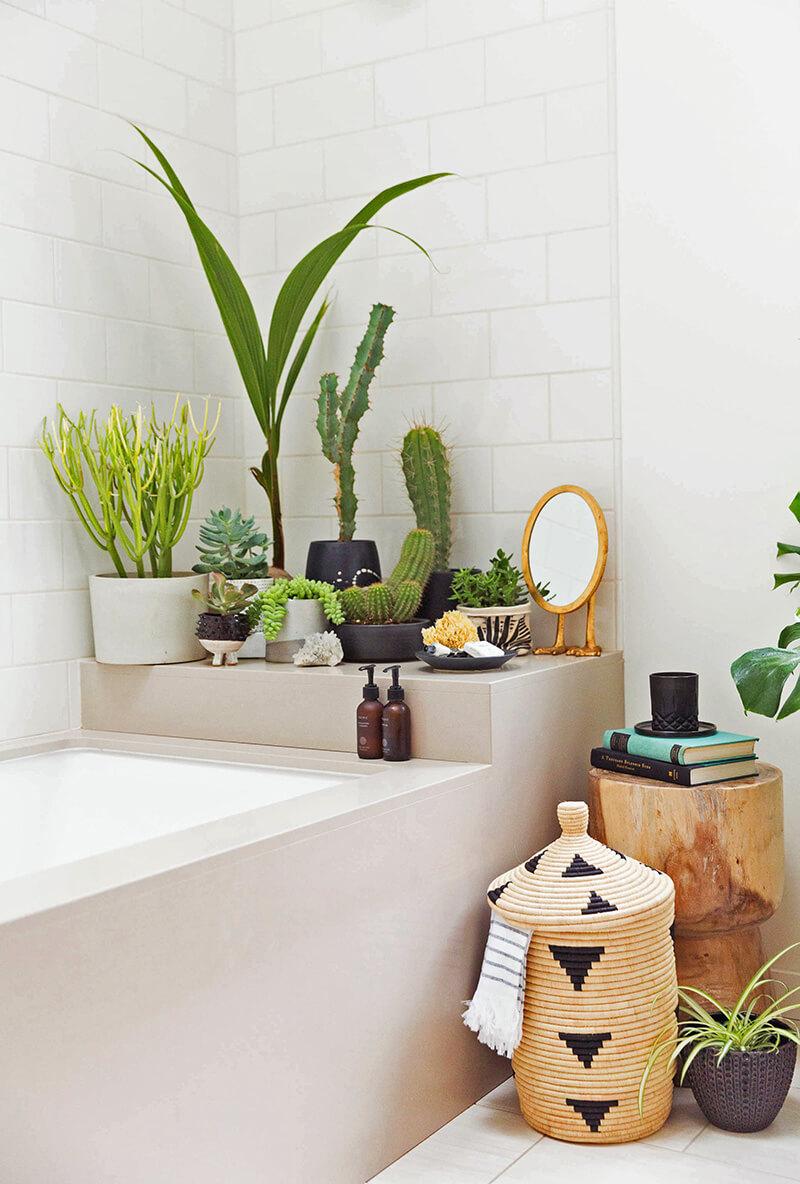 plantes baignoire hiver