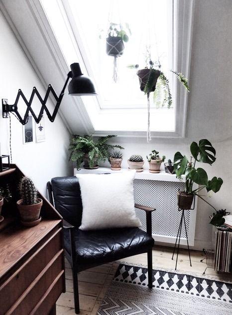 velux plantes